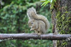 Squirrel, the same of disney's