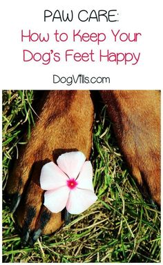 When it comes to dog healthy tips, the feet are often overlooked. Check out our paw care tips for healthy, happy pooches!