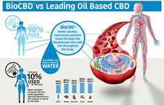 The first all natural, 100% bioavailable product for total body wellness, made with water soluble CBD* + Ayurvedic herbs. BioCBD+™ Total Body Care is not only the most bioavailable CBD* health support product, but also the safest because of our patented technology, BioCBD™.BioCBD™ is derived from organically grown hemp plants, and it contains all of the synergistic cannabinoids, terpenoids, and other compounds of the original plant. Each bottle contains 30 capsules.