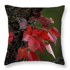 """""""Poison Ivy in the Fall"""" © E. B. Schmidt. All Rights Reserved. Nature art throw pillow. (Available as prints, canvas, metal, and more.) www.ebschmidt.com #schmidt #NatureDecor #autumn #FallDecor #RedDecor"""