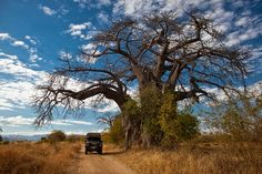 Zimbabwe's huge baobab trees make you feel very small African Quilts, Baobab Tree, Travel Articles, Zimbabwe, Beautiful Landscapes, National Parks, Paradise, Explore, Rock