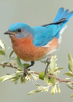 Bluebird Floral Greeting Card for Sale by William Jobes – Tiere Kinds Of Birds, All Birds, Cute Birds, Pretty Birds, Little Birds, Angry Birds, Exotic Birds, Colorful Birds, Beautiful Creatures