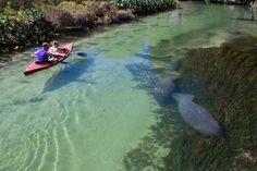 Weeki Wachee Kayak Rental and Canoe Rental - Weeki Wachee River|Florida Canoe Gallery