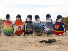 Phillip Island's Penguin Foundation uses sweaters to help rehabilitate small penguins affected by oil spills