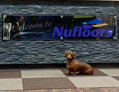 Vernon, Welcome, Labrador Retriever, Canada, Flooring, Facebook, Store, Dogs, Animals