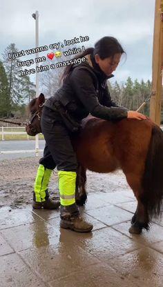 Funny Horse Pics, Cute Horse Pictures, Funny Horse Videos, Cute Animal Photos, Funny Animal Videos, Most Beautiful Horses, Pretty Horses, Horse Love, Animals Beautiful
