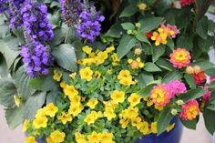 These flowers drape beautifully in hanging arrangements and grow well in containers.
