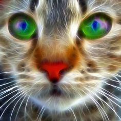 cat stare -digital art
