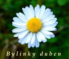 Bylinky duben - bylinky a rostliny sbírané v dubnu - Bylinky pro všechny Miss My Mom, July 11, Plants, I Miss My Mom, Miss You Mom, Plant, Planets