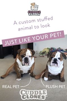 Create a custom stuffed animal of your pet with our simple ordering process. Upload a photo, enter unique details & submit! Order the original plush cuddle clone now! Cute Little Animals, Cute Funny Animals, Pet Organization, Cute Dogs And Puppies, Bulldog Puppies, Doggies, Funny Animal Memes, Dog Mom, Cuddling