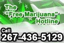 "The ""Free Marijuana"" Hotline: 267-436-5129  The ""Free Marijuana"" Hotline is  sponsored in part by The Medicinal Marijuana Council. In order to qualify for ""Free Marijuana"" samples, caller must be 18 years of age and a resident of the United States of America. For more information please call 267-436-5129."