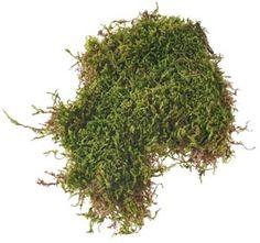 Zelený mach - FLORATEC - Veľkoobchod - aranžérske, floristické potreby…