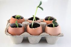 17 Clever Hacks for Your Vegetable Garden - Start Seedlings in Eggshells