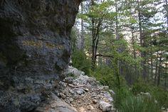 herman de vries, sanctuaire de Roche-Rousse, Alpes-de-Haute-Provence Haute Provence, Or, Plants, Alps, Landscape, Plant, Planets