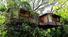 Another great treehouse Great Picture from www.TheMohicans.Net
