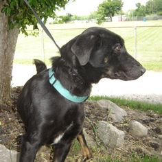 URGENT!!! In Miami County, Ohio On the EUTH LIST