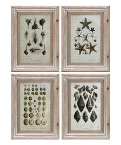 Loving this Carina Wall Art - Set of Four on #zulily! #zulilyfinds