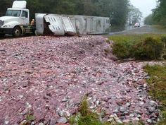A semi truck spilled a load of fish onto the northbound lanes of U. 101 in Pacific County. Imagine the SMELL! Stupid Images, Dead Fish, Semi Trucks, Shit Happens, Canning, Pets, Friday Morning, Food Trucks, Pet Food