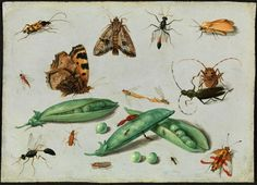 Jan van Kessel II Peapods and Insects 1650 oil on copper