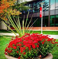 #instagramELE #rojo  El rojo es el color de mi universidad. Tu escuela o universidad tiene un color especial? #SP211F15 #SP101F15 #sacredheartuniversity