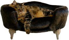 La alimentación del gato de interior http://blog.theyellowpet.es/alimentacion-gato-interior/