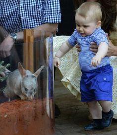 Prince George visit the 2014 Nightlife display at Taronga Zoo, view a Bilby called George and officially name the Prince George Bilby Exhibit