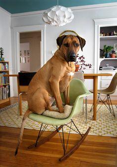 Pets on Furniture 2010 Winner Update