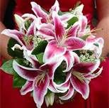 stargazer lily bouquet for wedding (mine would be turquoise, gold, and white)