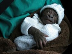 Baby primates. I kid you not, you will ovulate.