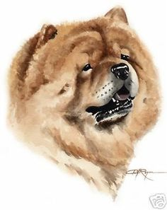CHOW CHOW  DOG watercolor 8 x 10 art print signed DJ Rogers #Realism