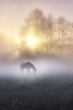 Misty morning