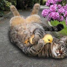 Расслабьтесь, сопротивление бесполезно — если у вас живет кошка, вы уже попали в рабство!