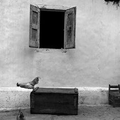 Rodney Smith  Chicken, La Vallée, Haiti, 1982