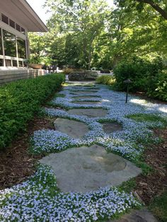 I love the flowering ground cover between these stepping stones but I'm not sure what it is. If you know, please tell us!