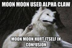 Moon Moon howls at the moon's moon.   Moon Moon   Know Your Meme