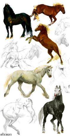 horse studies by akreon Horse Drawings, Animal Drawings, Cool Drawings, Horse Sketch, Horse Anatomy, Animal Sketches, Equine Art, Art Studies, Horse Art