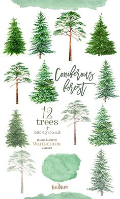 Watercolor Clipart Spruce Pine Conifer trees Forest by ReachDreams #LandscapingWatercolor