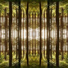 Photo fun  looks like some fantasy cathedral.  It's my old photo mirrored.  #photomirror #fun #photofun #forest #summer #memories #photography #nature #naturephotography #fotografia #grass  #instaphoto #夏 #夏の思い出 #写真術 #花 #自然 #草 #森林 #여름 #여름의추억 #사진술 #월경 #자연 #잔디 #숲 by shoo.so