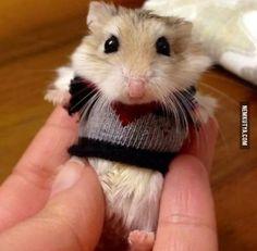 Csak egy hörcsög pulcsiban :)