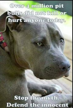 Pit Bull Puppies Stop the myth! Pit bulls are amazing dogs! I Love Dogs, Puppy Love, Cute Dogs, Dog Quotes, Animal Quotes, Beautiful Dogs, Animals Beautiful, Amazing Dogs, Pitbulls