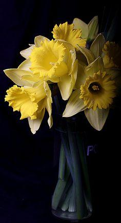 Bouquet of Daffodils #fairyfoufrou www.fairyfoufrou.com