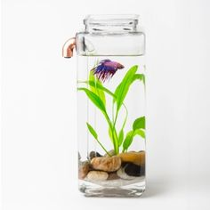 NoClean Aquariums Presents The Easiest Pet Betta Fish Environment Ever (Video!) ... see more at PetsLady.com ... The FUN site for Animal Lovers