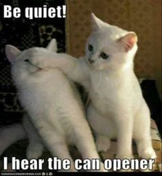 Funny animals, can opener