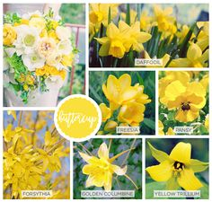 Spring Flowers inspired by Pantone Colors of the Year - Blackband Design