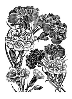 Digital Stamp Design: carnations
