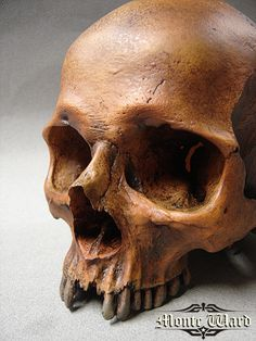 Human Skull Replica by ~dreggs88 on deviantART