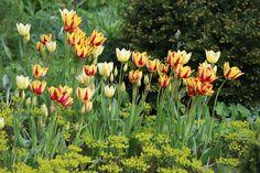 Plants, Cakes, Garten, Pictures, Flora, Plant, Planting