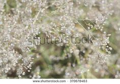 Sunny summer meadow. Herbs with dew drops. Beautiful background wild herbs with dew drops; small depth of field.