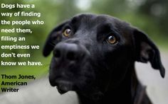 A great #bigbarker #quote #dog