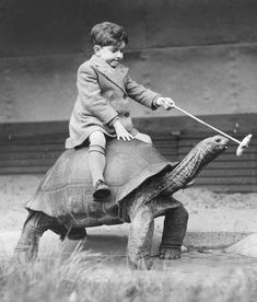 """Just taking my tortoise for a walk – YOLO."" 